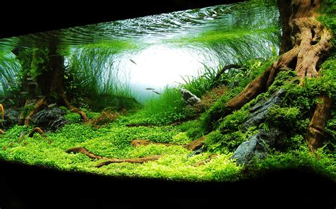 aquascaping planted tank planted aquarium inspirational aquariums pinterest