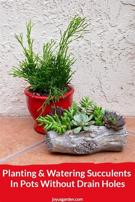Planter Without Drainage Holes by Planting Watering Succulents In Pots Without Drain Holes
