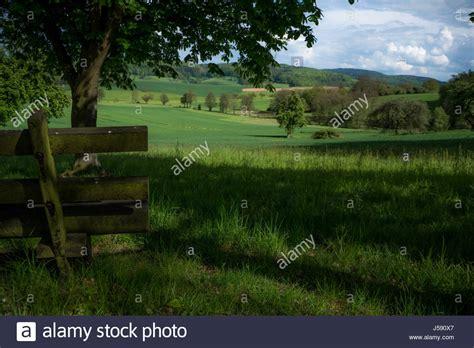 bench under tree bench under tree stock photos bench under tree stock