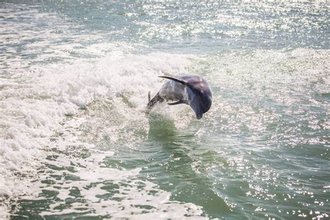 sw boat tours in florida 8 must do experiences in southwest florida must do