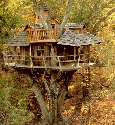 cool tree house unique and creative tree houses