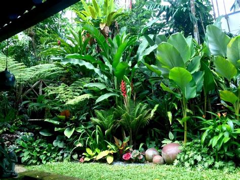 17 best ideas about tropical style on pinterest tropical style decor beach style live plants front yard landscaping ideas florida of 17 best ideas