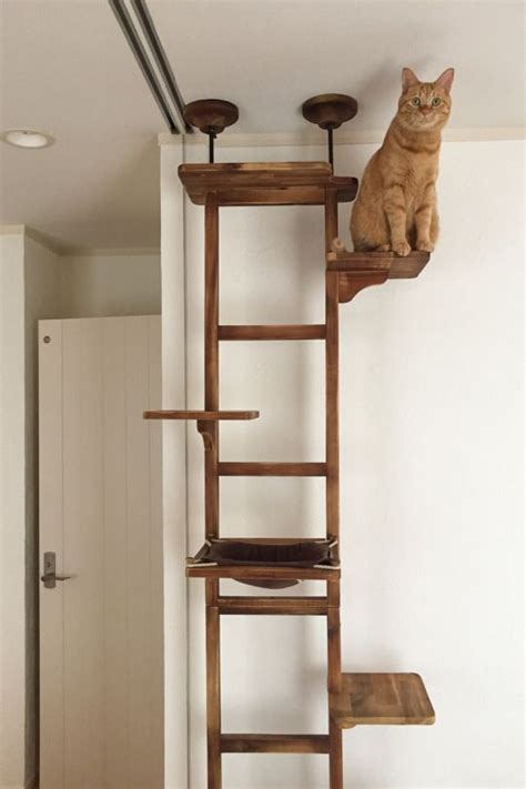 cat tree 1000 ideas about cat trees on image cat cat