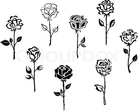 rose flowers vektorgrafik colourbox