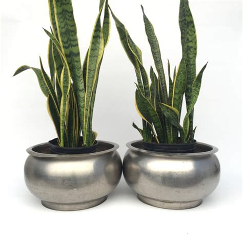 Chrome Planters by Silver Chrome Planter Pots Stainless Steel Seperator