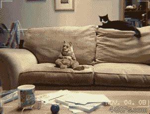 sofa liegen silly cat of the day derrolyn