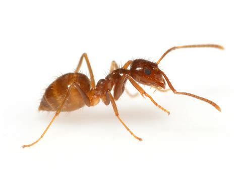 ants in car post what s in your car ants debugged car talk