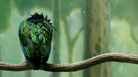 green colored green colored bird wallpapers hd wallpapers id 6464