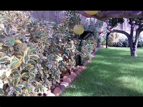 con giardino prato giardino con prato e piante wmv