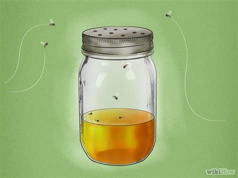 Gnats In Kitchen How To Get Rid Of Them by Best 25 Gnat Traps Ideas On