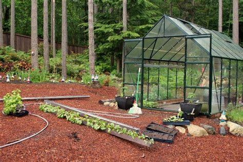 greenhouse vegetable gardening growing vegetables in a greenhouse tomatoes and peppers
