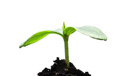 cool small palnts to grow the growth of young green plants time lapse isolated stock footage video 4339865 shutterstock