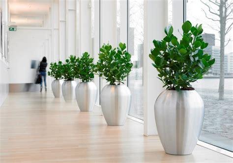 Zimmerpflanze Kaufen 711 pflanzen indoor green raumbegr 252 nung