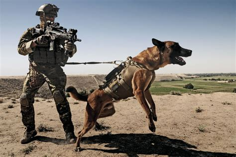 army dogs working quotes quotesgram