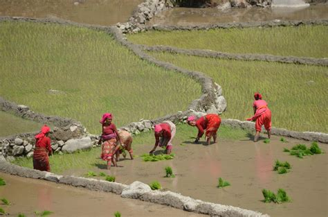third world and developing countries news times topics irin the trouble with nepal s agriculture