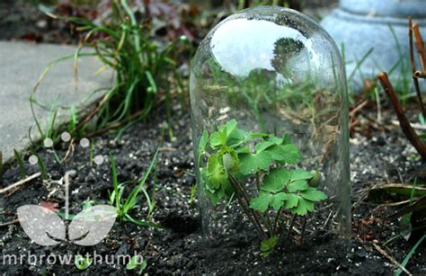 Garden In Glass How To Make Your Own Garden Cloches To Protect