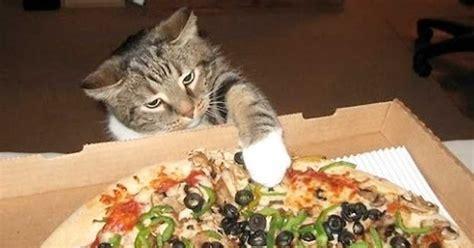 libro pizza kittens le avventure di norvy il gatto immaginario di luca e chiara la pizza 3 176 pt kiria eternalove