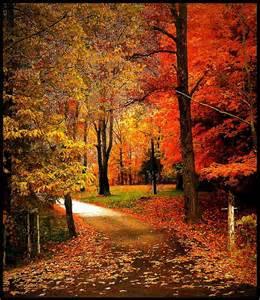 falling leaves i love autumn colors pinterest