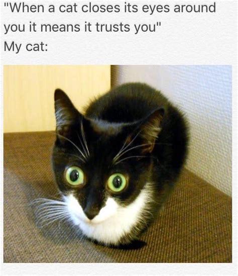 Random Cat Meme - random tease with az wine spillage and memes for fun