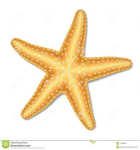 starfish images starfish stock image project 2 patterns