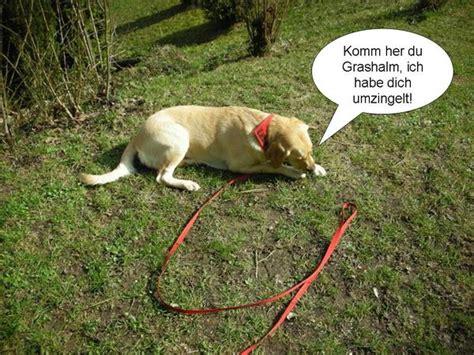 Hund Im Garten Beschäftigen by Hund Im Eigenen Garten Anbinden Seite 8 Sonstiger Talk Rund Um Den Hund Dogforum De Das