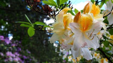 pianta fiori bianchi fiori bianchi classificazione e variet 224 per il giardino