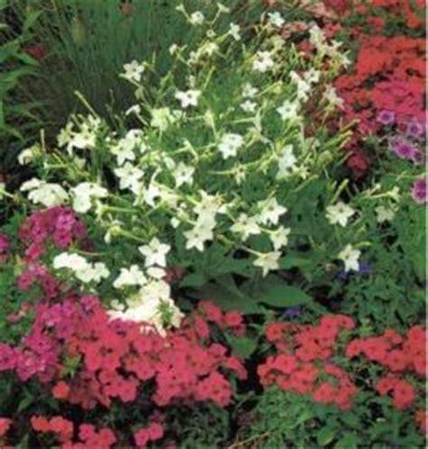 bordure fiorite fiori e aiuole creare e curare le bordure fiorite verdeblog