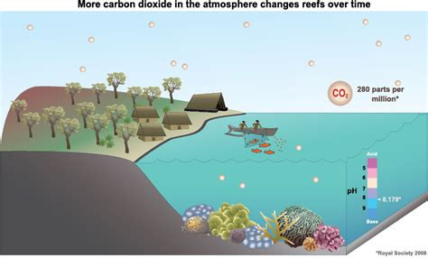 climate change could cause cold blooded animals thermal coral reefs and climate change how does climate change