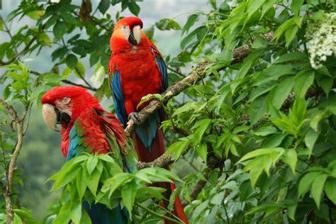 la fauna pictures vivepazdeariporo fauna llanera