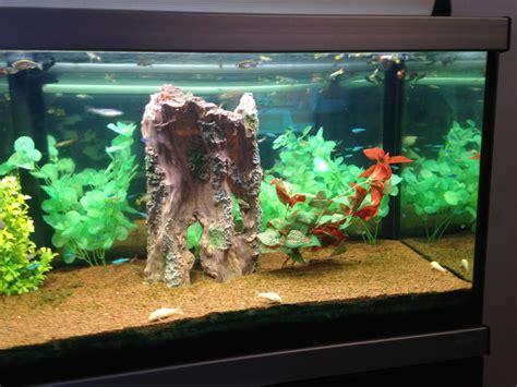 moana xmovies8 aquarium passion aquarium tanganyika 240m par mionell