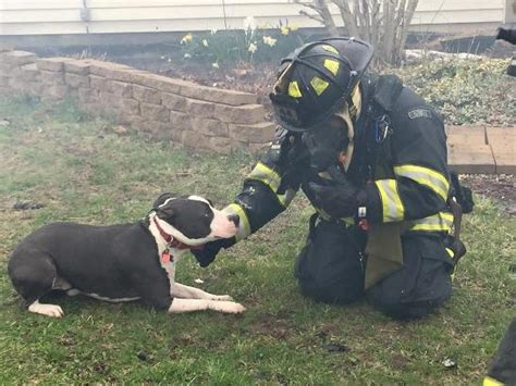 dog house for pitbull indianapolis pit bull alerts dog mom to house fire