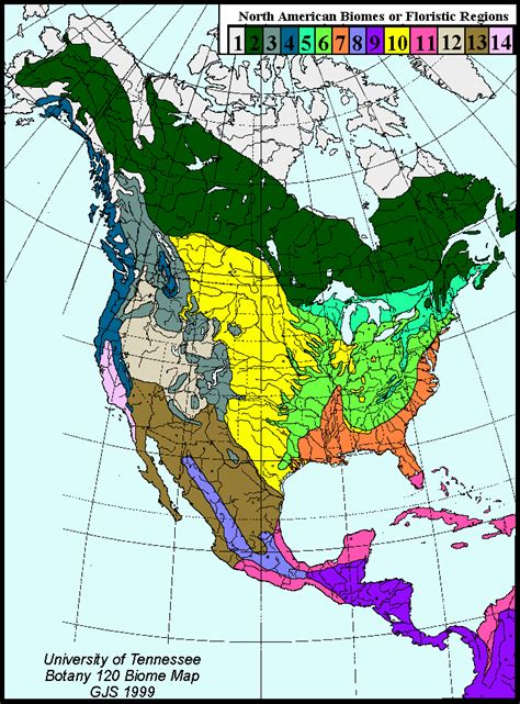 america map of biomes here are predictable tree communities that define a
