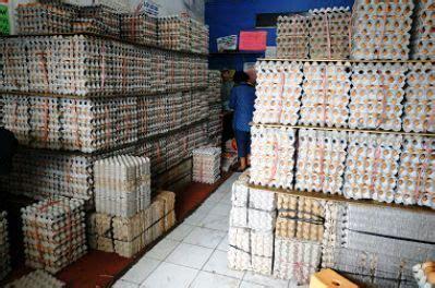 distributor agen telur jakarta