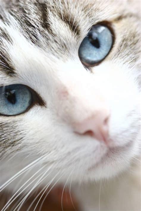 imagenes ojos blancos 10 ideas sobre perro de ojos azules en pinterest perros