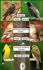 birds unlimited february 2012
