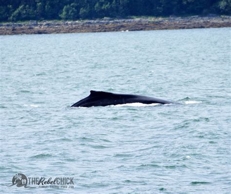 The Miracle Whales Whale In Alaska On The Carnival Miracle Lumiaatsea