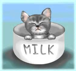 quot cute kitty quot just because ecard blue mountain ecards