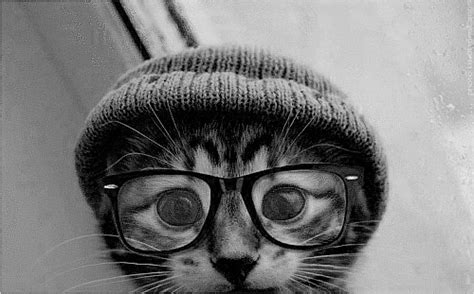 tumblr themes nerd hipster cat on tumblr