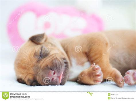 Lie For Sound With The Cubic Pillow by New Born Whelp Sleeping Peaceful Stock Photo Image 40314222