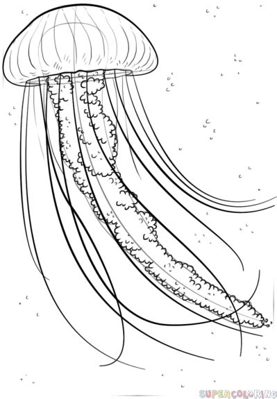 realistic jellyfish coloring pages how to draw a jellyfish step by step drawing tutorials