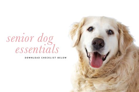everything you need for a puppy senior checklist what you need for an pretty fluffy pretty fluffy