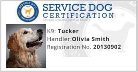 ada service registration golden retrievers one of the favorite service breeds