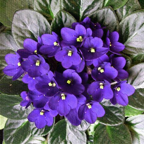 violet s casey artandcolour violets aren t blue