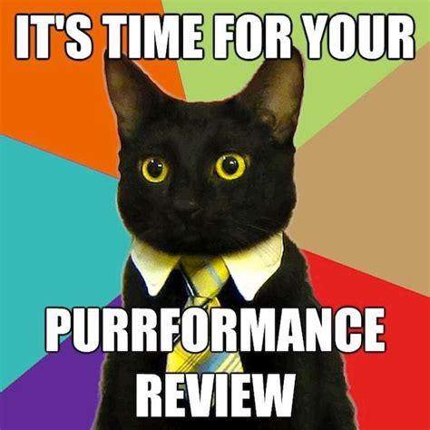 Office Cat Meme - business cat memes caterville