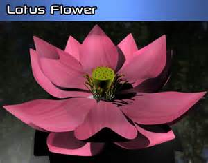 3d Lotus Flower 3d Models Lotus Flower 3docean