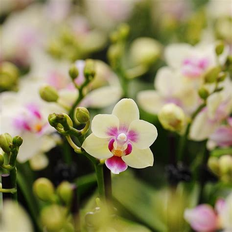 care of orchids after flowering caring for phalaenopsis orchids after flowering 28 images how to care for your