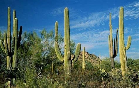 fiori di cactus piante piante grasse cactus piante grasse