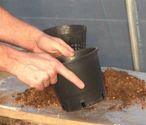 vasi per piante acquatiche preparazione terreno e vasi per ninfee piante acquatiche