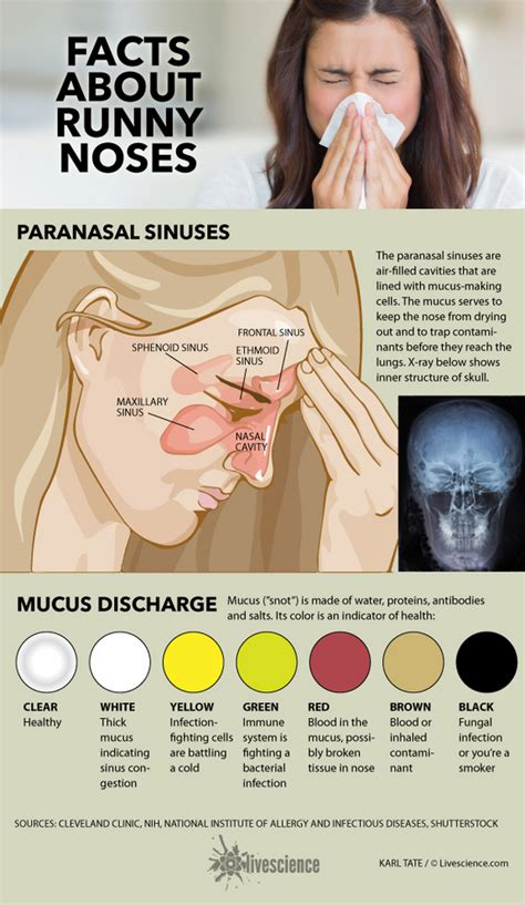 what your snot says about you infographic