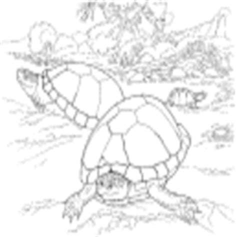 desert turtle coloring page desert tortoise 187 coloring pages 187 surfnetkids
